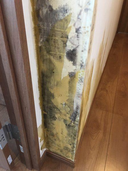 カウンター背面、居室壁面リフォーム後の除カビ防カビ